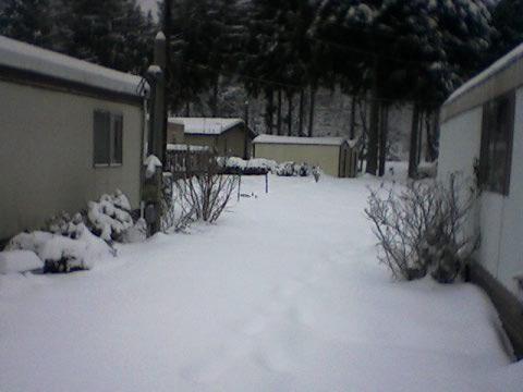 snowyyard